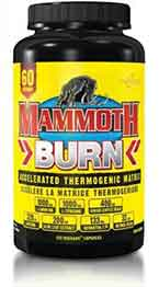Mammoth Burn fat burner